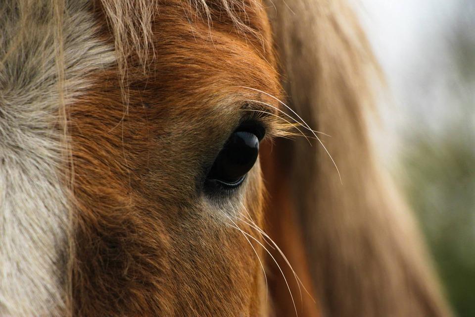 Jocelyn Petot où comment le talent pour la musique et la passion pour les chevaux lui ont fait faire le tour du monde. Éco'Aveyron