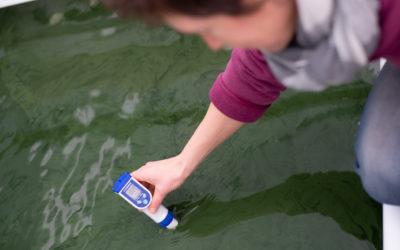 Spiruline des Grands Causses – La micro-algue qui fait le maximum